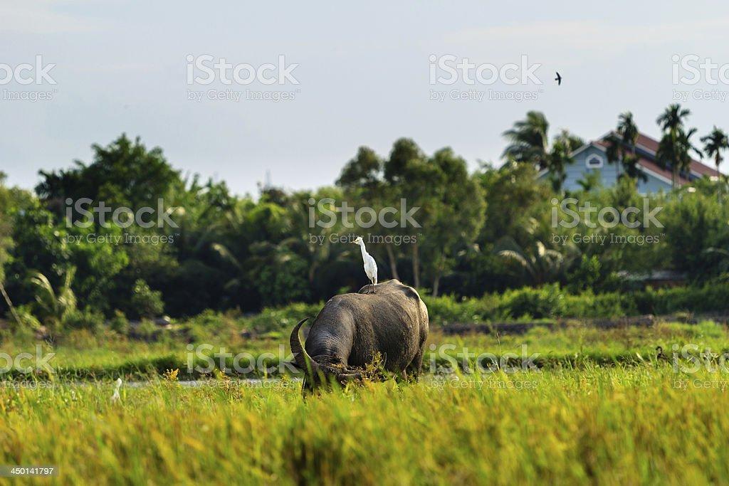 Vietnam Countryside stock photo
