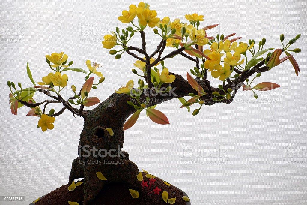 Vietnam spring flower, clay apricot blossom stock photo