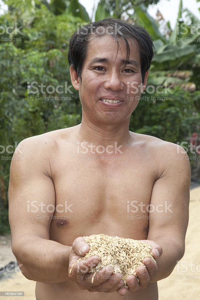 Vietnam, working at a rice paddy. royalty-free stock photo