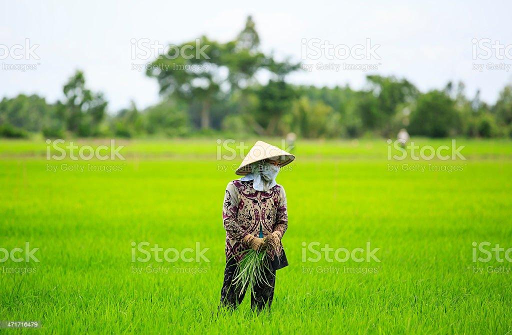 Vietnamese Farmer stock photo