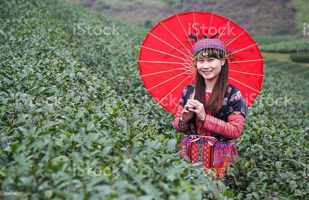 Vietnamese Hmong girl in traditional costume picking tea bud stock photo