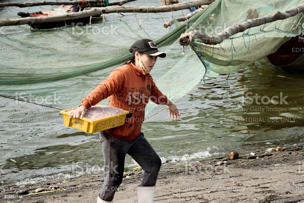 Vietnamese woman carrying shrimp catch in a plastic baskets. December 26, 2013 - Da Nang, Vietnam stock photo