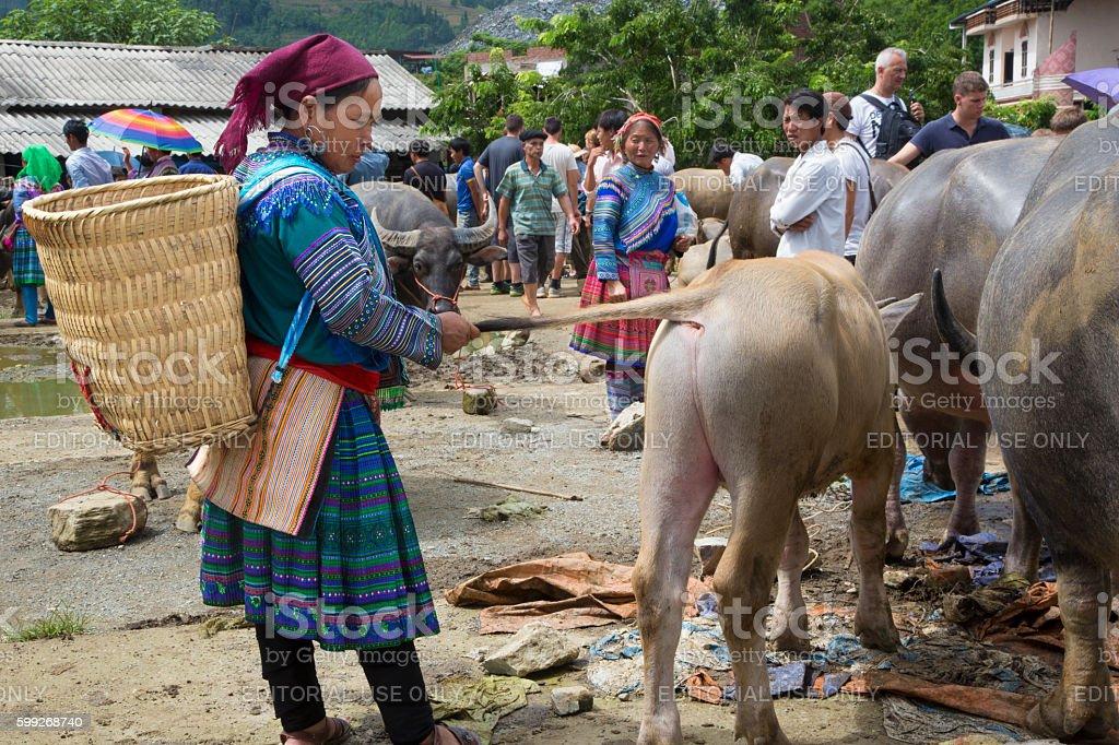 Vietnamese woman examines a calf in outdoor market. stock photo