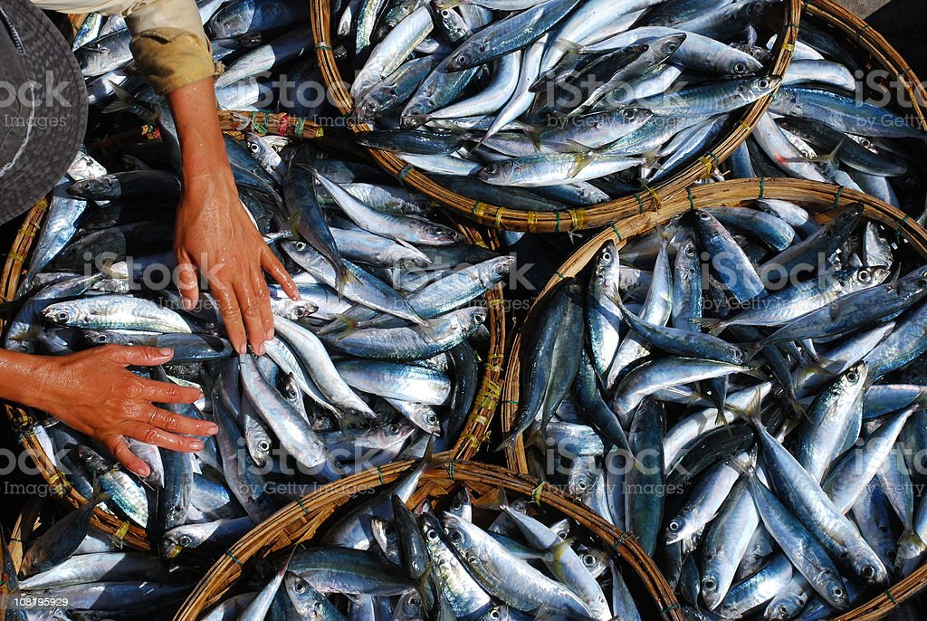 Woman's Hands in baskets of fish in Hoi An, Vietnam royalty-free stock photo