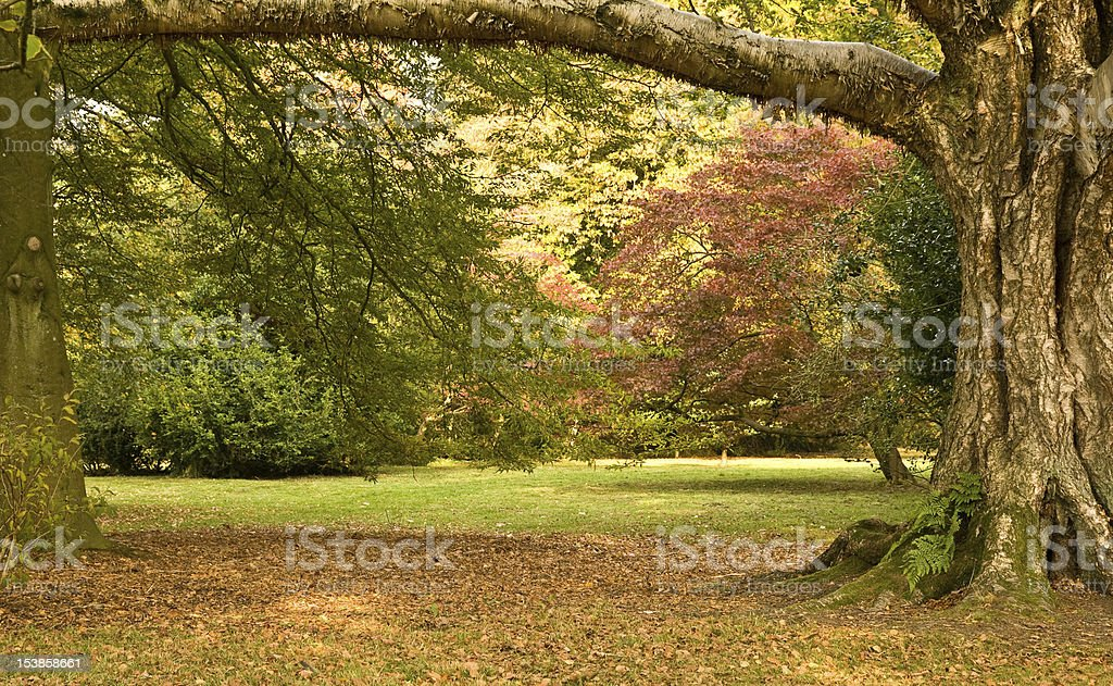 View at an Arboretum stock photo