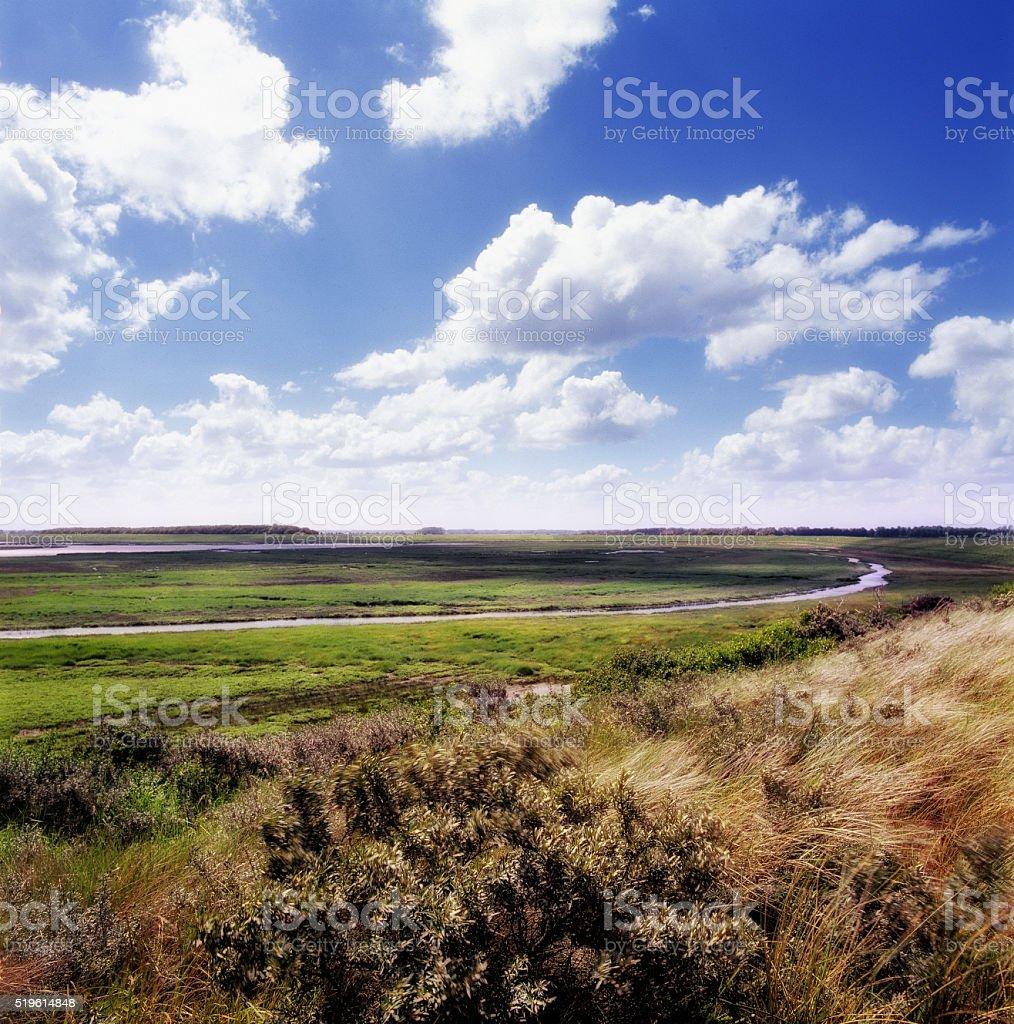 View at Het Zwin, Belgium stock photo