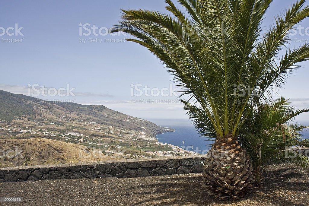 View at Santa Cruz with Palm royalty-free stock photo
