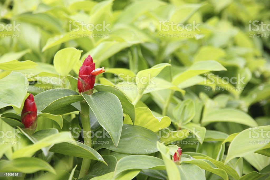 View below Green leaf in the garden. royalty-free stock photo