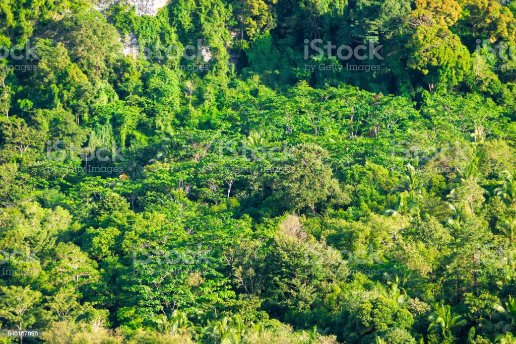 A view from above on a tropical forest that grows on a rocky rock stock photo
