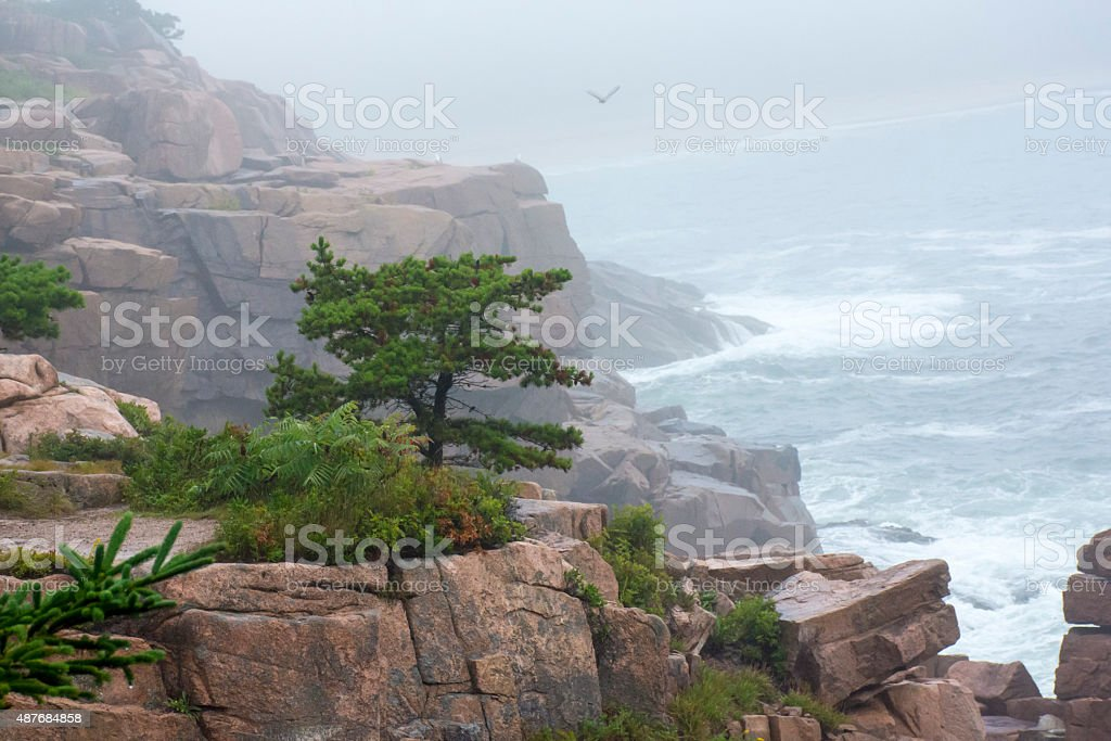 View from Acadia Park stock photo