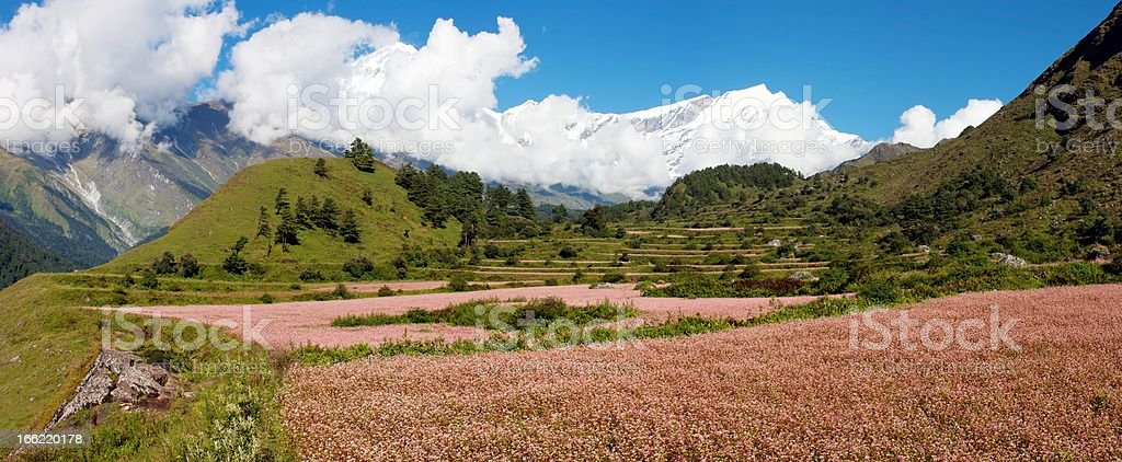 view from annapurna himal to dhaulagiri with buckwheat field royalty-free stock photo