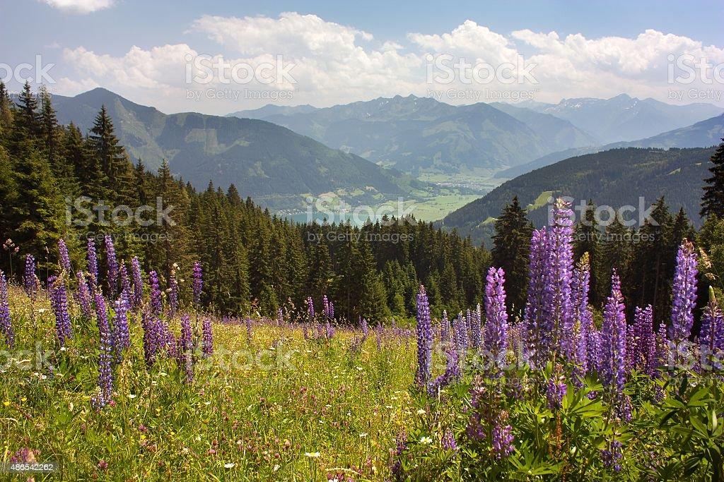 View from Austrian Alps around Zell am See stock photo