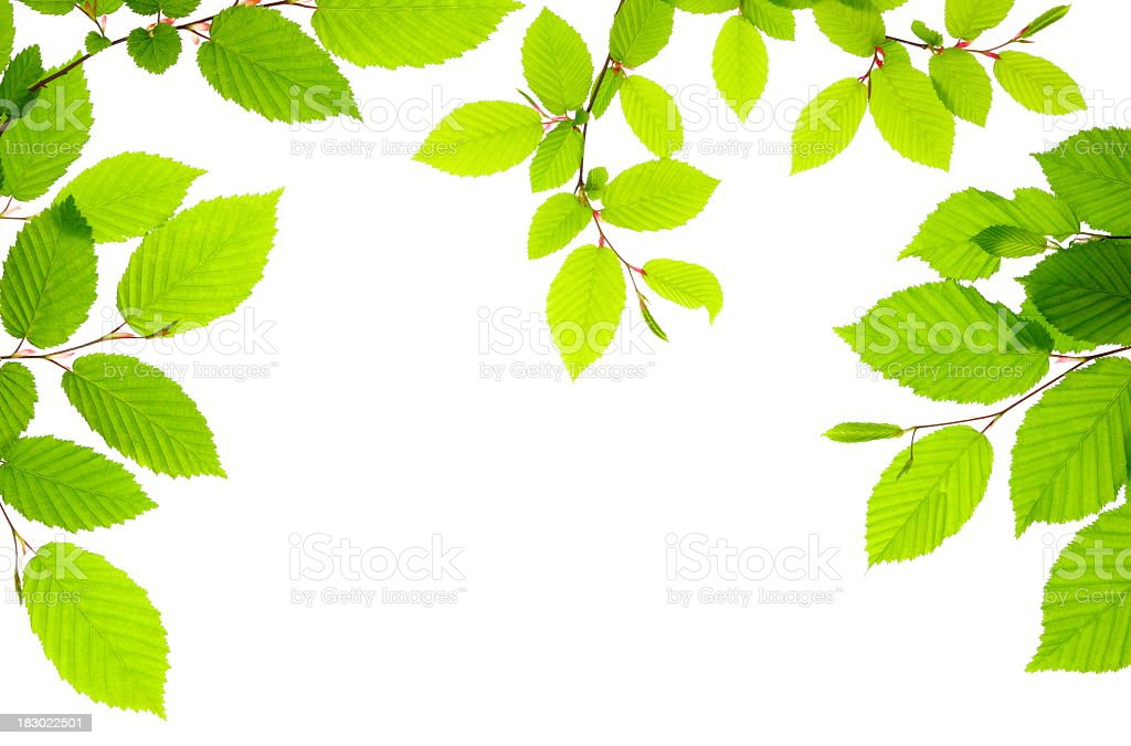 View from below of delicate branches with green leaves royalty-free stock photo