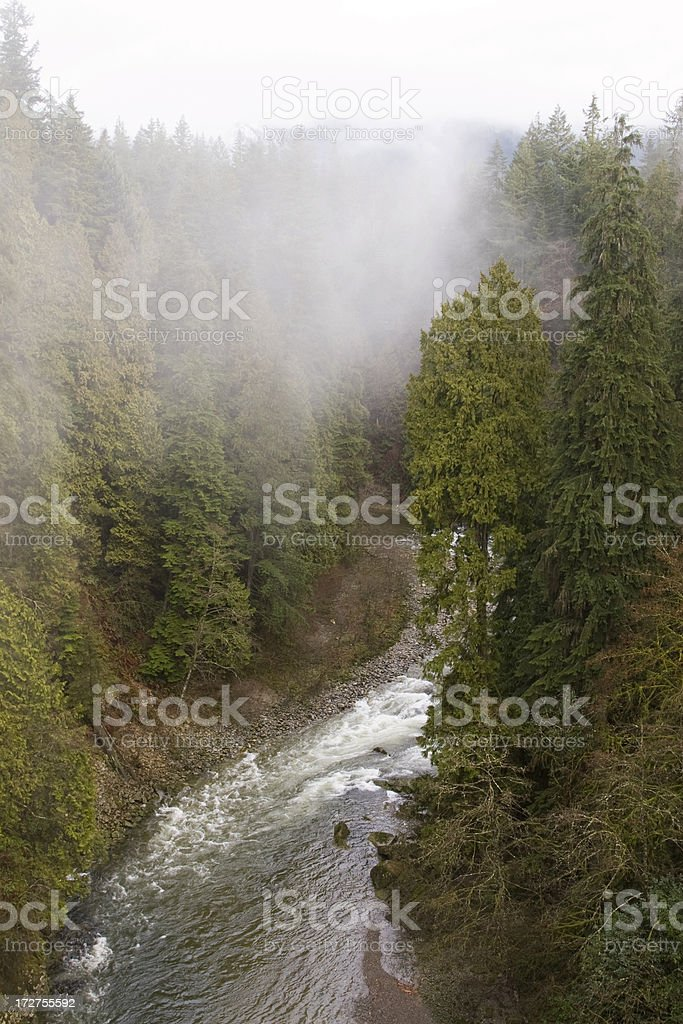 View from Capilano Suspension bridge stock photo