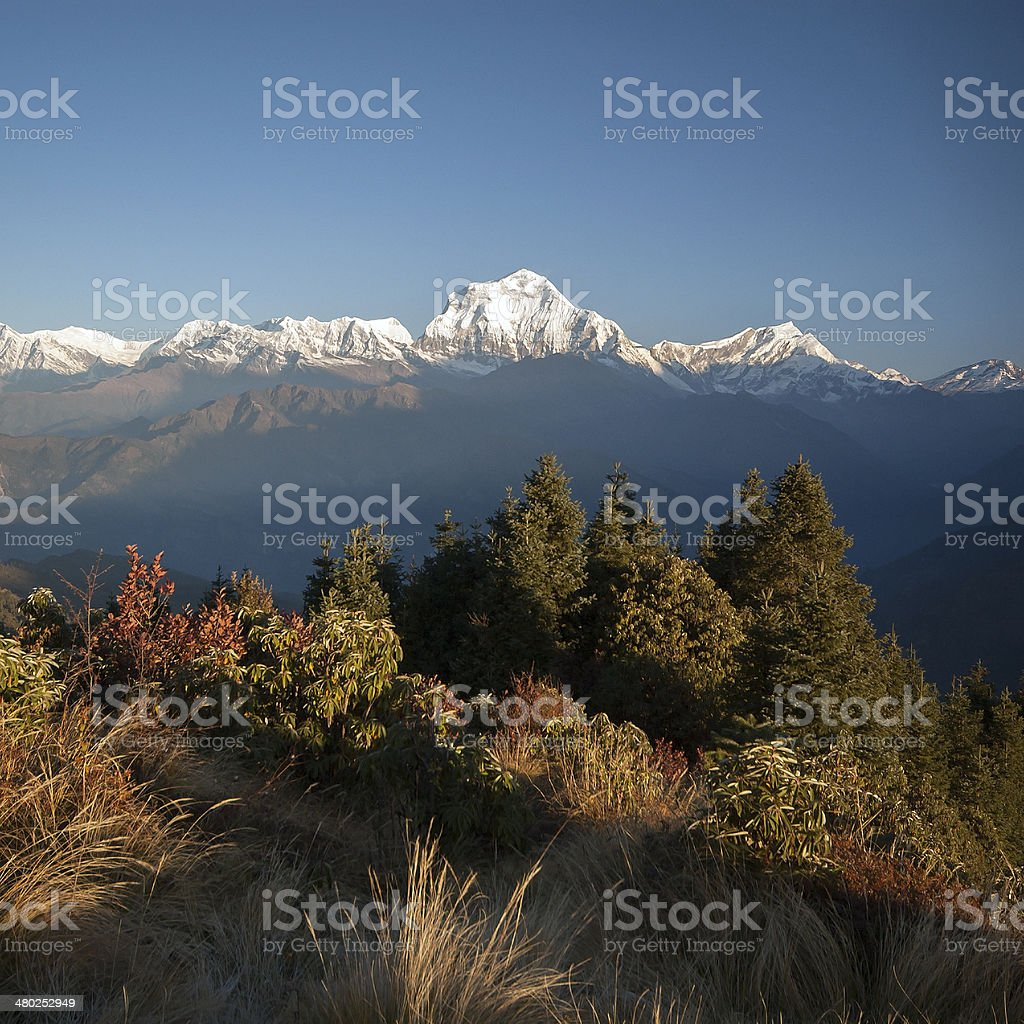 View from Poonhill, Nepal royalty-free stock photo