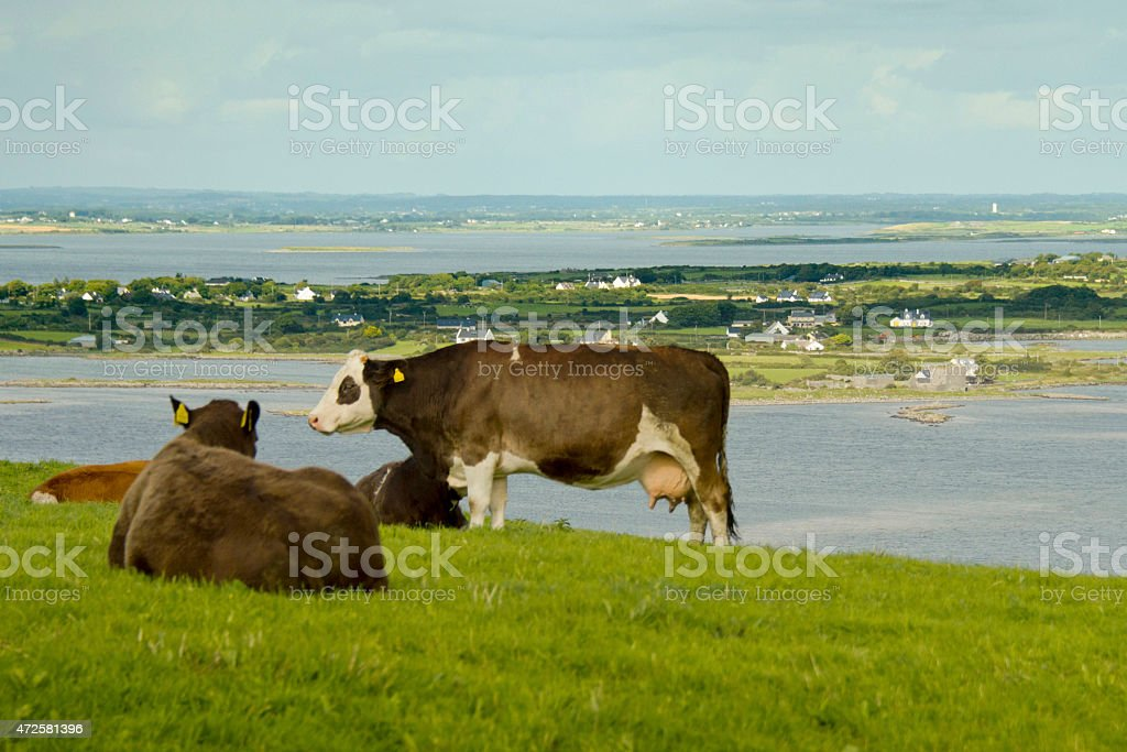 View from the Burren in Ireland stock photo