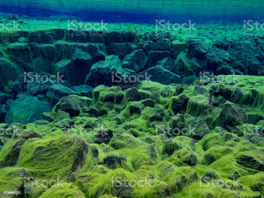 View from the Side of Continental Split at Silfra in Shallow Section at Pingvellir National Park with Green Carpet Algae stock photo