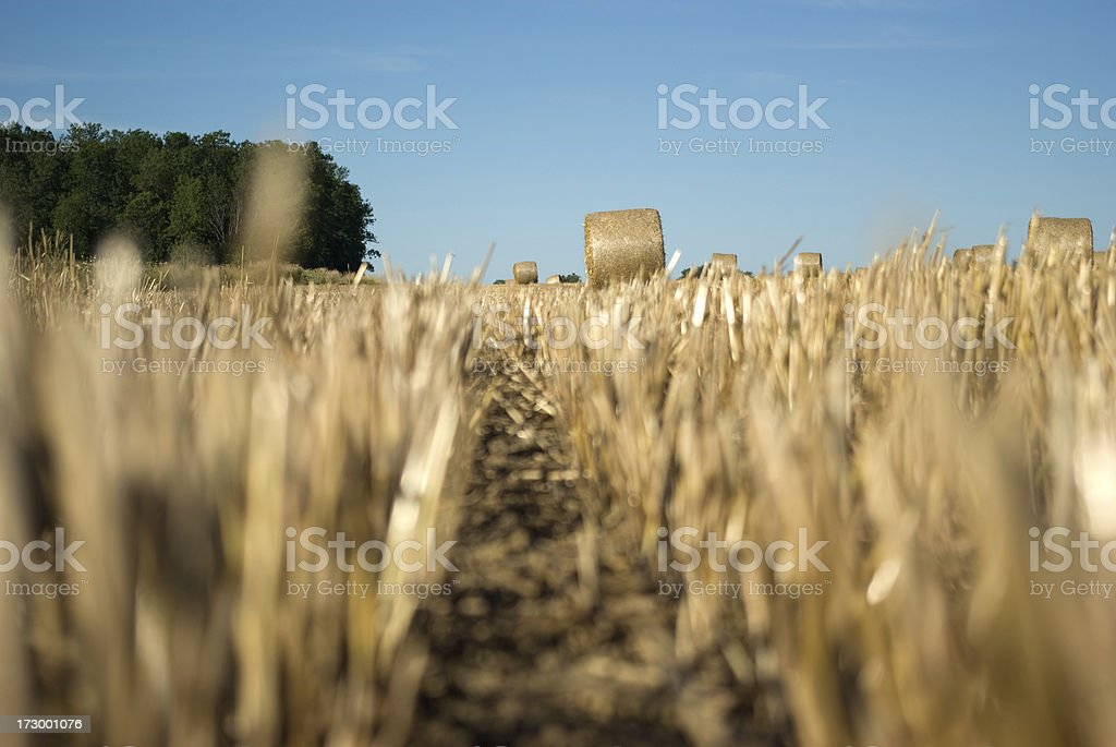View From the Stubble royalty-free stock photo