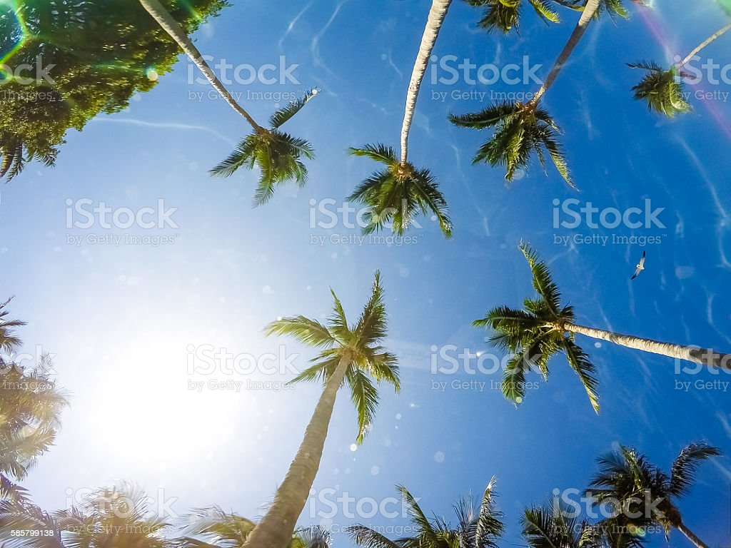 View from the Tropics stock photo