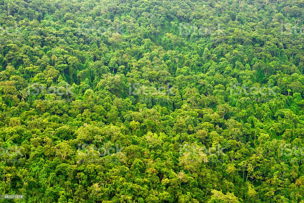 view from top on rain forest stock photo