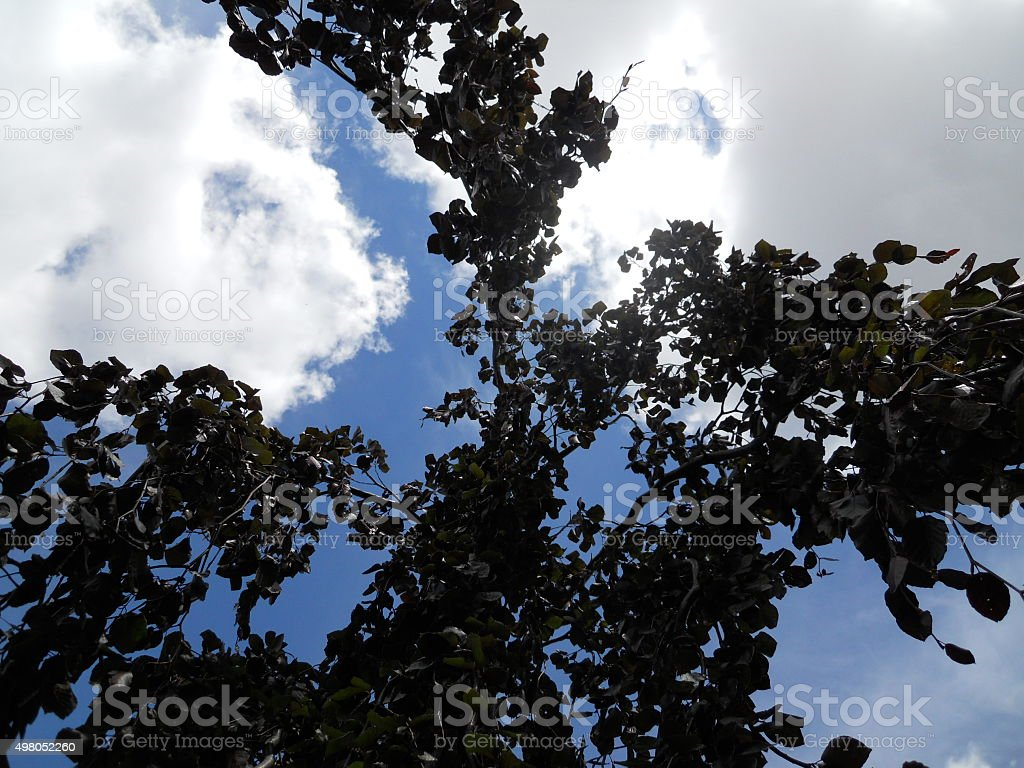 View from Under a Weeping Beech stock photo