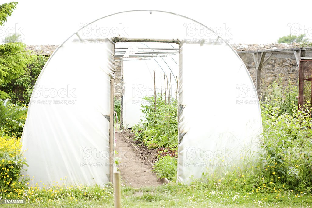 View into a in polytunnel stock photo