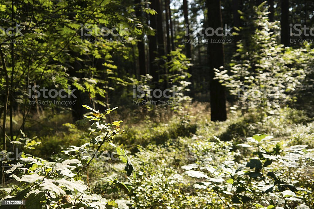 view into forest stock photo