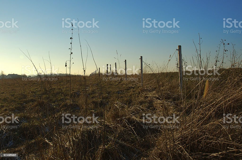 View into the field royalty-free stock photo
