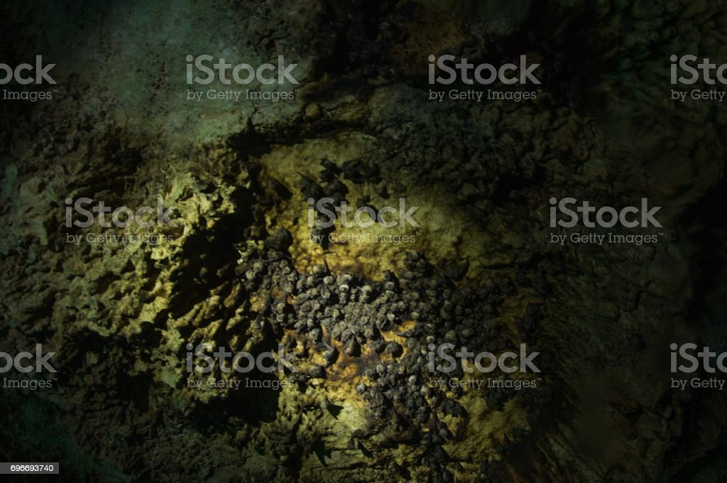 view looking up inside cave of bats living in cenotes stock photo