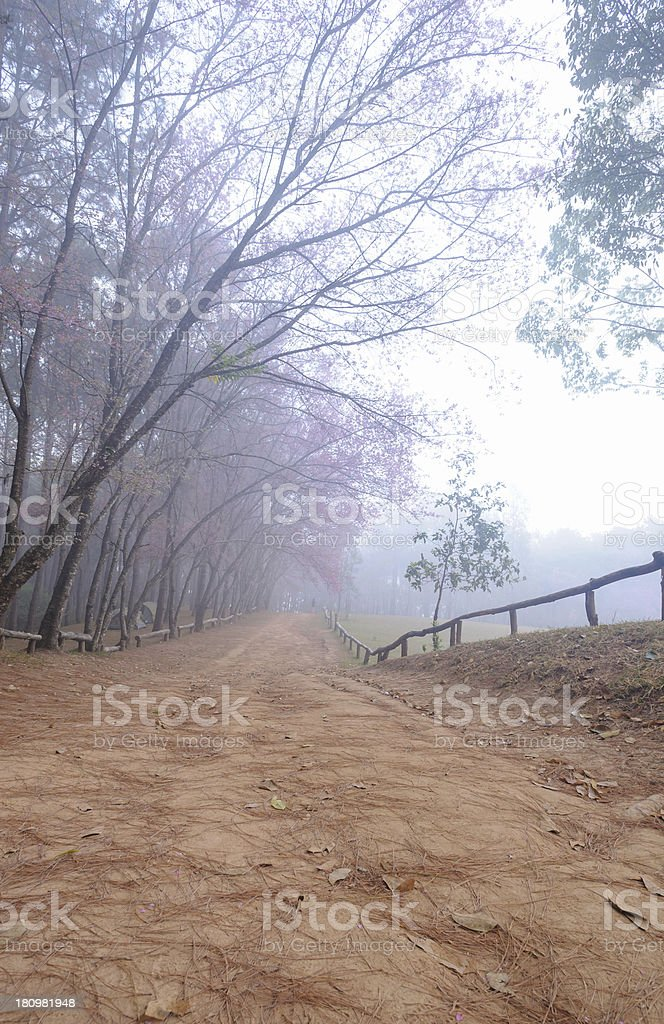View natural  forest royalty-free stock photo