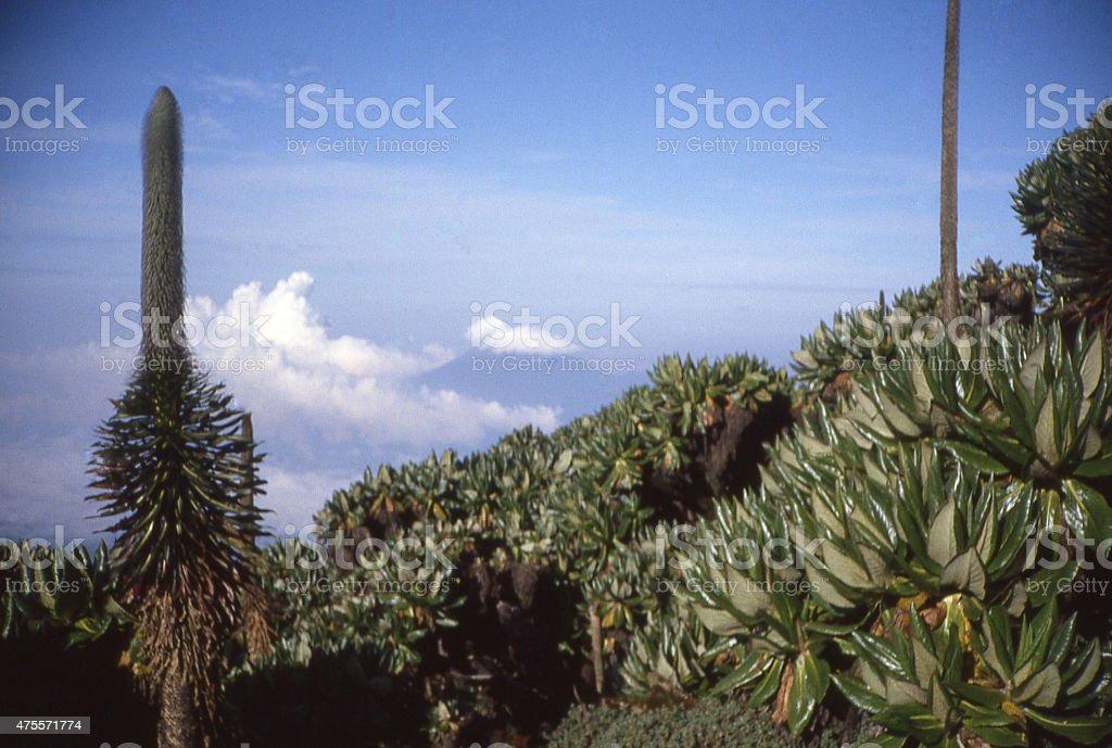 View Nyiragongo Volcano Clouds Mount Karisimbi Rwanda Central Africa stock photo