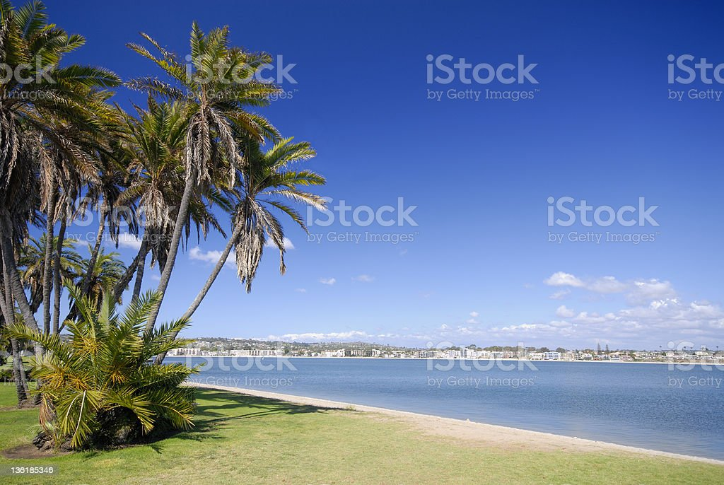 A view of a beach with palm trees and a city in the back stock photo