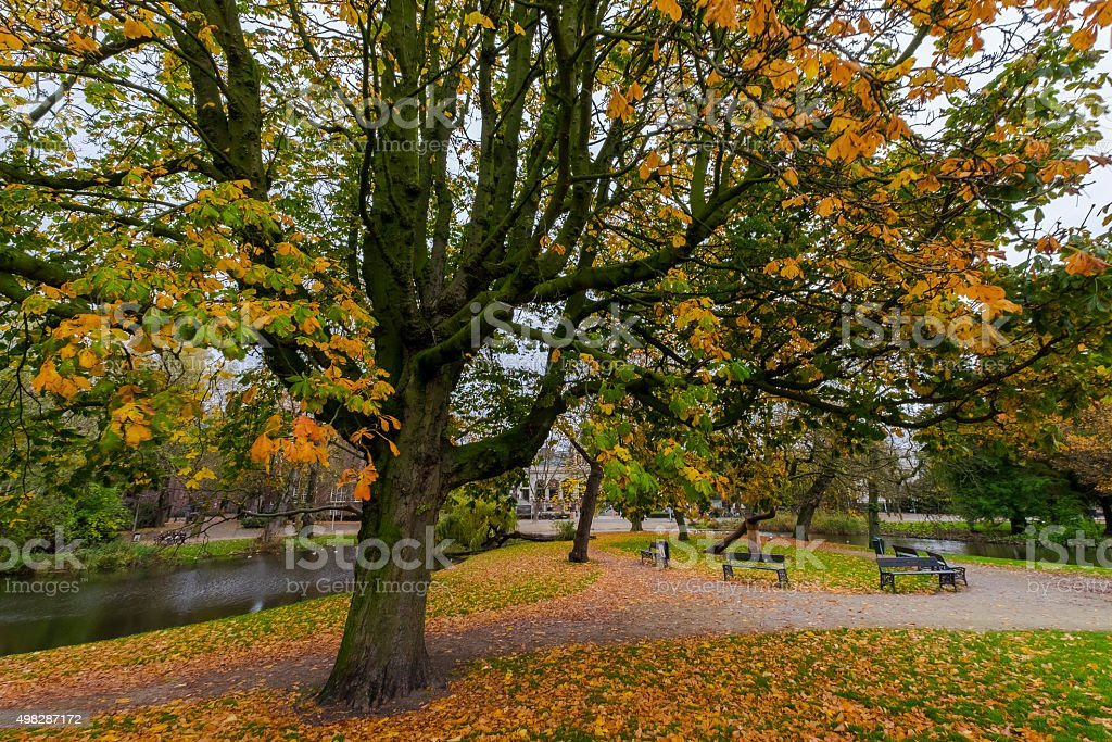 View of a park during Autumn. stock photo