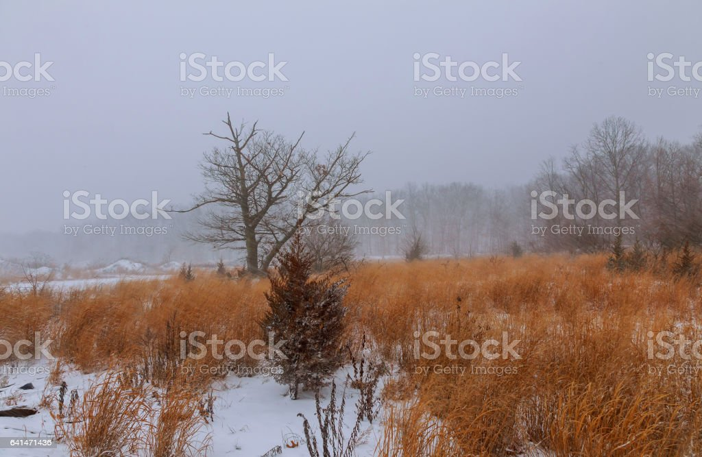 View of a park in winter stock photo