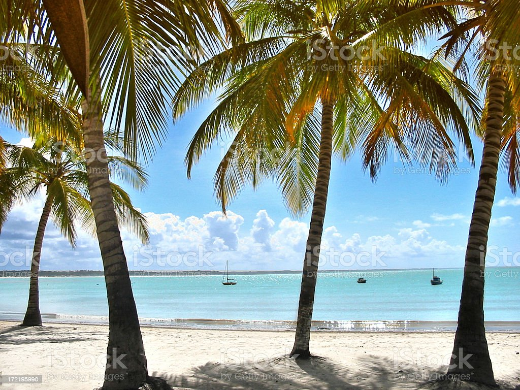 A view of a tropical beach in between Palm trees royalty-free stock photo