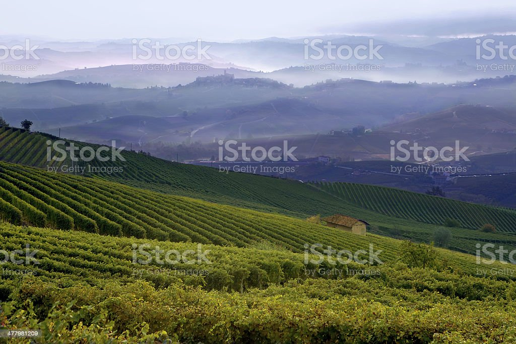 View of a vineyard in Langhe, Piedmont, Italy stock photo