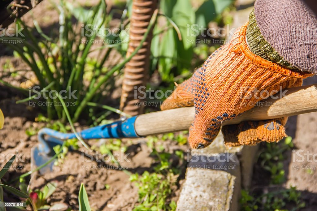 view of a woman's hand hoeing weeds in the garden stock photo