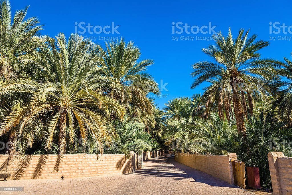 View of Al Ain Oasis, the Emirate of Abu Dhabi stock photo