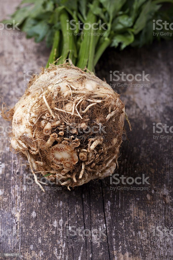 View of ball root of celery plant royalty-free stock photo