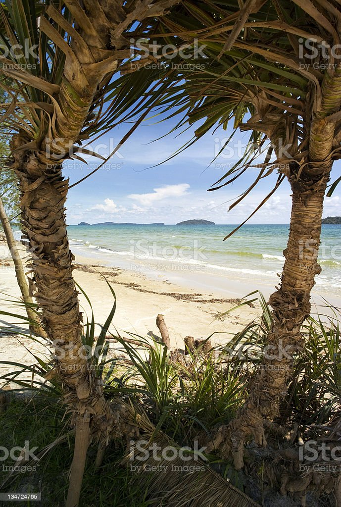 View of Beach Between Two Palms royalty-free stock photo