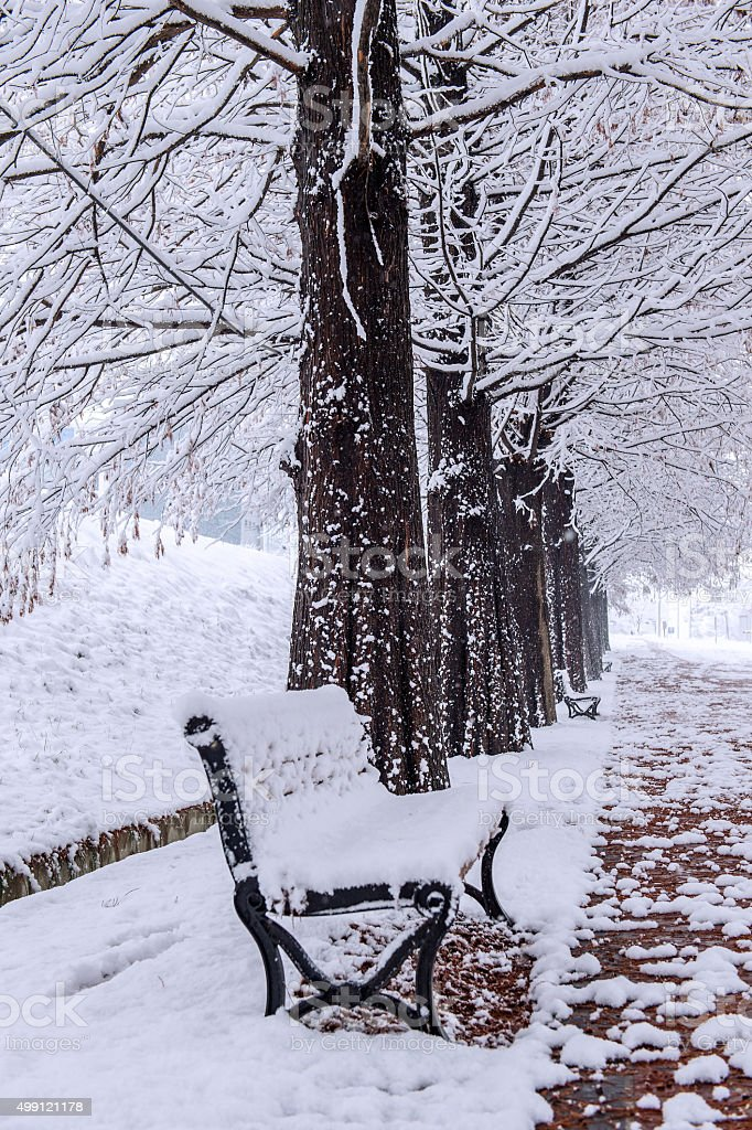 View of bench and trees with falling snow. stock photo
