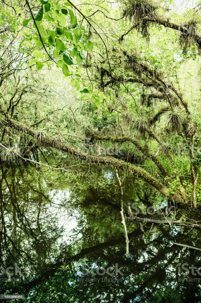View of Big Cypress National Preserve royalty-free stock photo