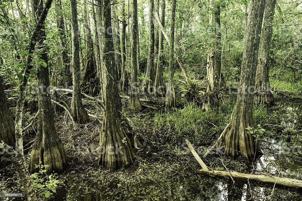 View of Big Cypress National Preserve stock photo