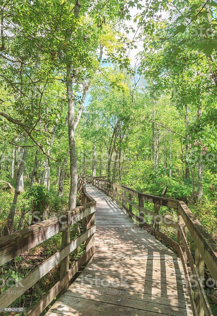 View of Boardwalk in Reedy Creek Swamp stock photo