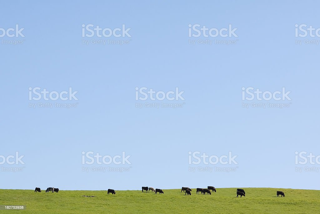 View of cattle grazing on green pasture royalty-free stock photo