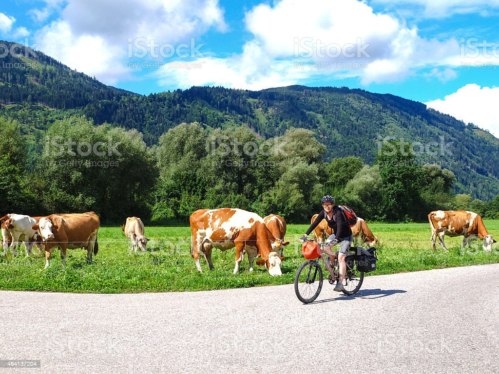 View of drau cycle path with biker and cows, Austria stock photo