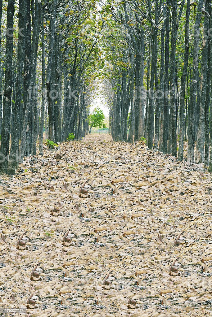 View of fallen dried leaves royalty-free stock photo