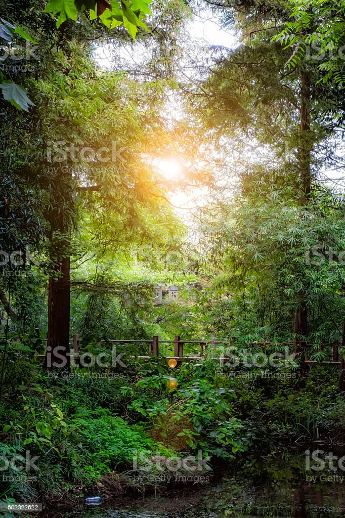 View Of Footbridge Over Stream In Forest stock photo
