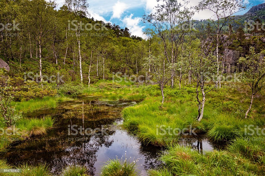 View of forest marsh stock photo