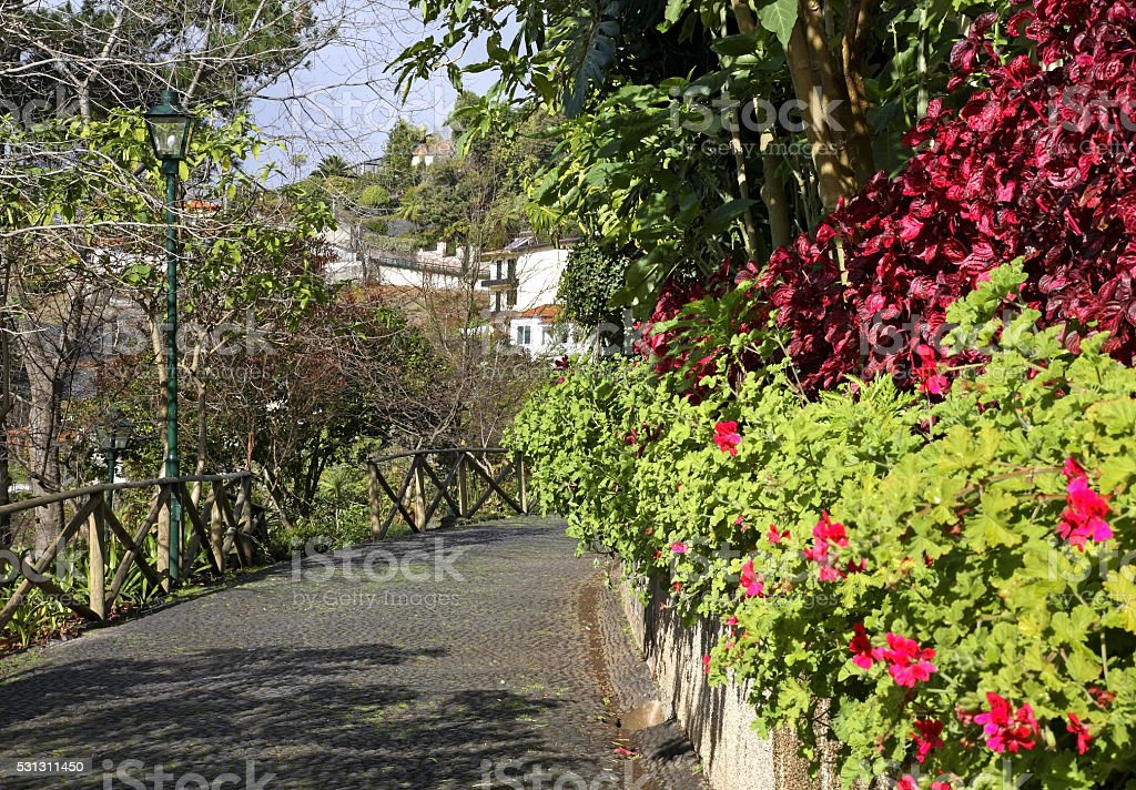 View of Funchal. Madeira island. Portugal stock photo